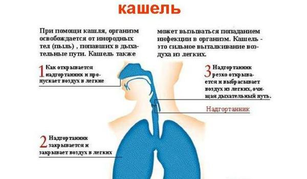 Что пить при беременности если сильный кашель
