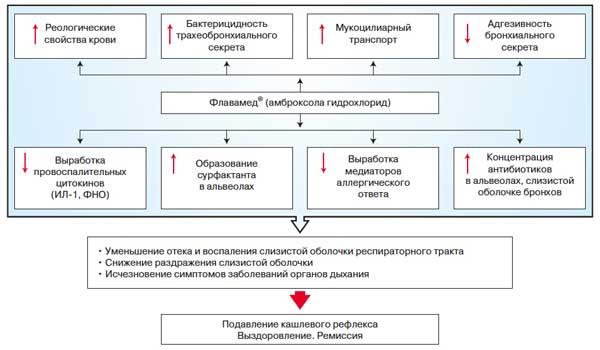 Схема влияния амброксола на заболевания