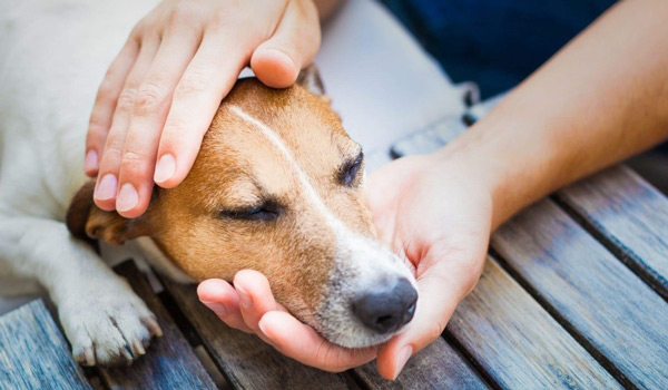 Симптомы астмы у собак, ее причины и способы лечения