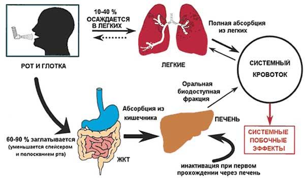 Механизм системной биодоступности препарата