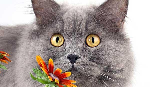 Астмы у кошек: диагностика, профилактика и лечение
