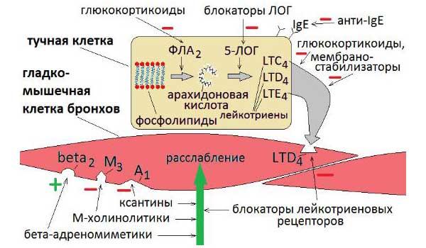 Антагонисты лейкотриеновых рецепторов