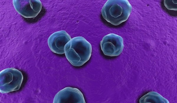 Хламидия пневмония: диагностика, терапия и профилактика